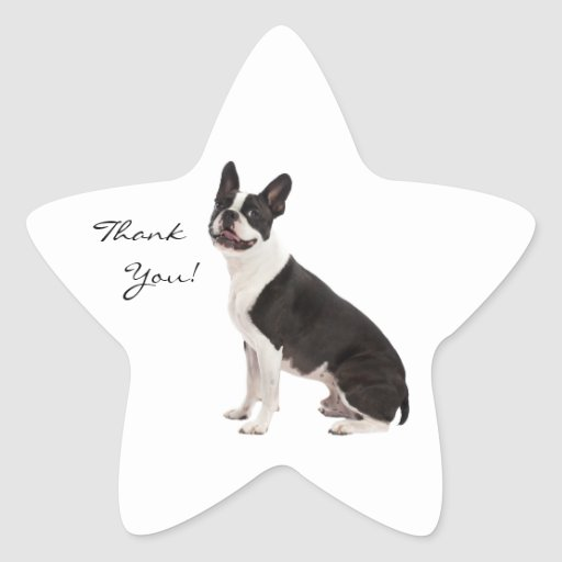Boston Terrier dog thank you custom stickers