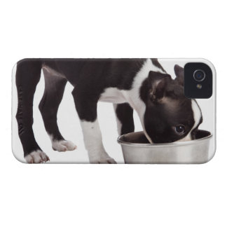 Boston terrier eating from bowl iPhone 4 Case-Mate case