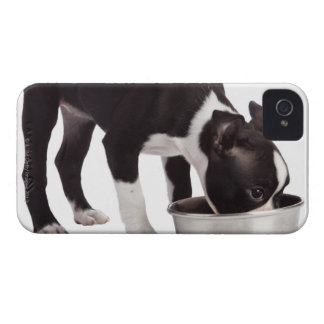 Boston terrier eating from bowl iPhone 4 Case-Mate cases