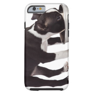 Boston terrier eating from bowl tough iPhone 6 case