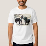 Boston Terrier  & French Bulldog Tee Shirts