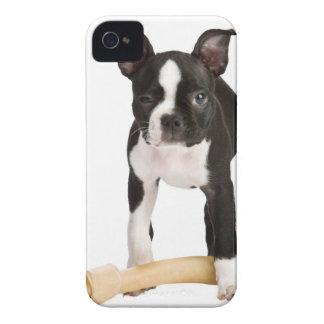Boston terrier guarding twisty bone Case-Mate iPhone 4 cases