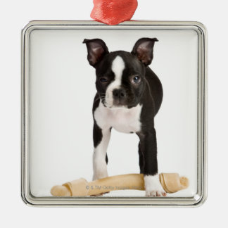 Boston terrier guarding twisty bone christmas ornament