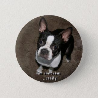 Boston Terrier:  I'm Innocent 6 Cm Round Badge