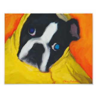 Boston Terrier in a yellow rain coat Photo Print
