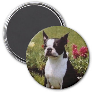 Boston Terrier in the Garden Magnet