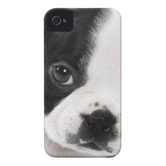Boston Terrier iPhone 4 Cases
