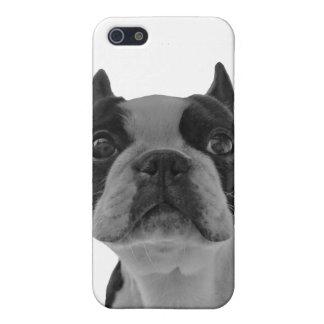 boston terrier iPhone 5/5S case