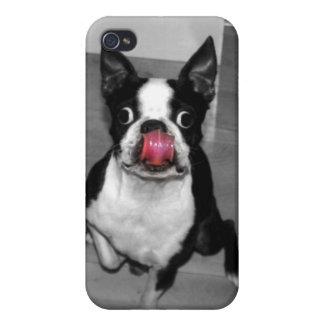 Boston Terrier Iphone Case iPhone 4/4S Case
