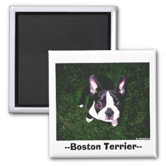 --Boston Terrier-- Magnet
