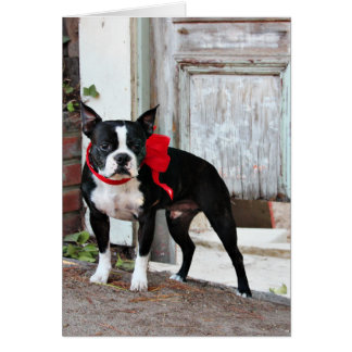 Boston Terrier - Miles Card