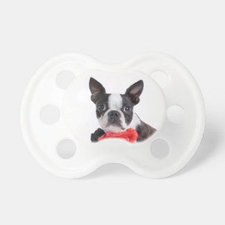 Boston Terrier Mollie mouse child Dummy