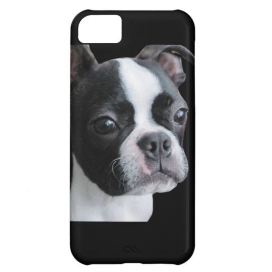 Boston Terrier: More than my share of cuteness