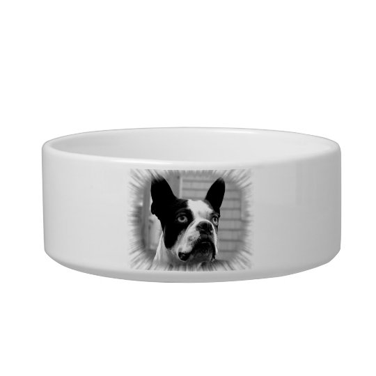 Boston Terrier Pet Bowl