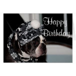 Boston Terrier photo Greeting Card