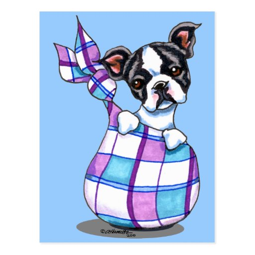 Boston Terrier Plaid Sack Puppy Post Cards