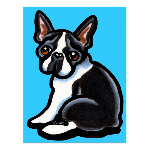 Boston Terrier Profile Post Cards