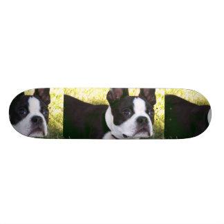 Boston Terrier Pup Skateboard