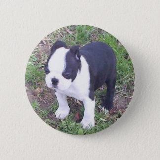Boston Terrier Puppy 6 Cm Round Badge