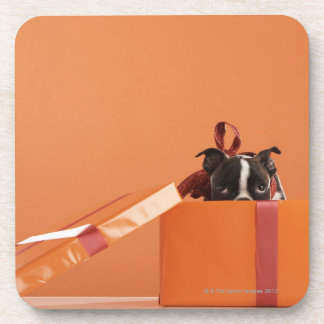 Boston terrier puppy in gift box coasters
