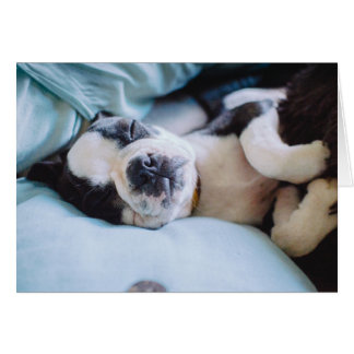 Boston Terrier Puppy Napping in bed Card