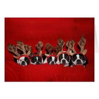 Boston Terrier Reindeer Greeting Card
