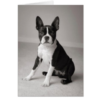 Boston Terrier Sitting Note Card