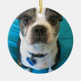 Boston Terrier sitting on a bed Christmas Ornament