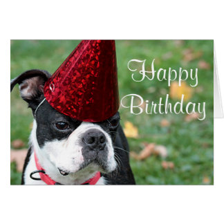 Boston terrier with a birthday hat card