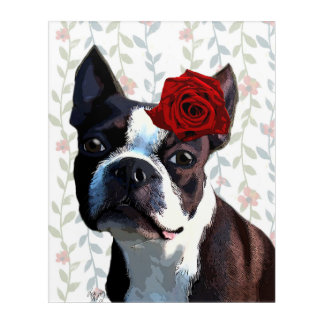 Boston Terrier with Rose on Head Acrylic Print