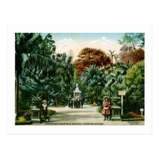 Botanic Gardens Sydney Australia Vintage Postcards