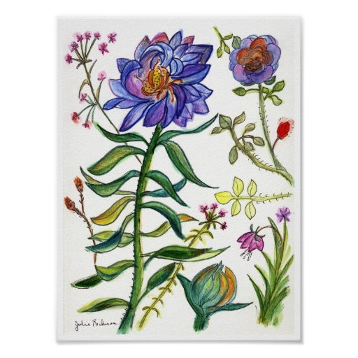 Botanical Drawing of Wonderful Blue Flower Poster