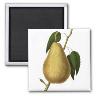 Botanical Fruit Pear Magnet