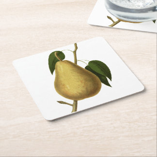Botanical Fruit Pear Square Paper Coaster