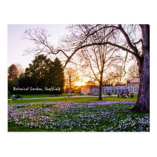 Botanical Garden in Sheffield Postcard