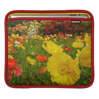 Botanical gardens at Queens Park iPad Sleeve