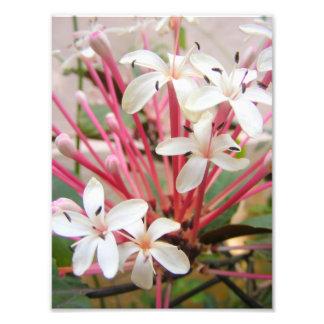 Botanical Gardens IV Photograph