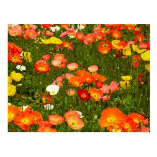 Botanical gardens postcard