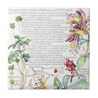Botanical Honeysuckle Wildflower Flowers Tile