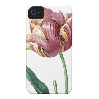 Botanical illustration Tulip iPhone 4 Cases