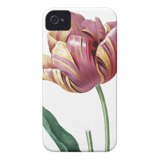 Botanical illustration Tulip iPhone 4 Cover