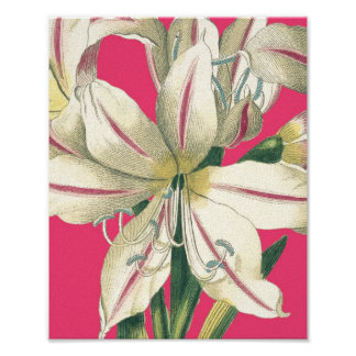Botanical Lilly in Pink Posters