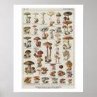 Botanical Mushrooms Chart