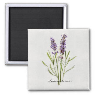 Botanical Painting Lavender Flowers Magnet