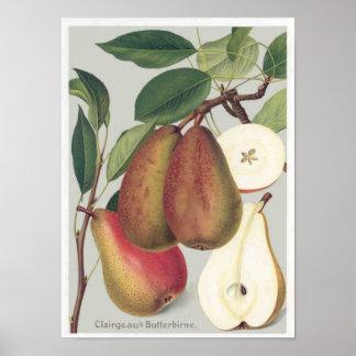 Botanical Pears Print