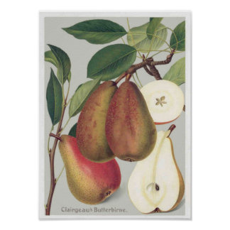 Botanical Pears Vintage Illustration Poster