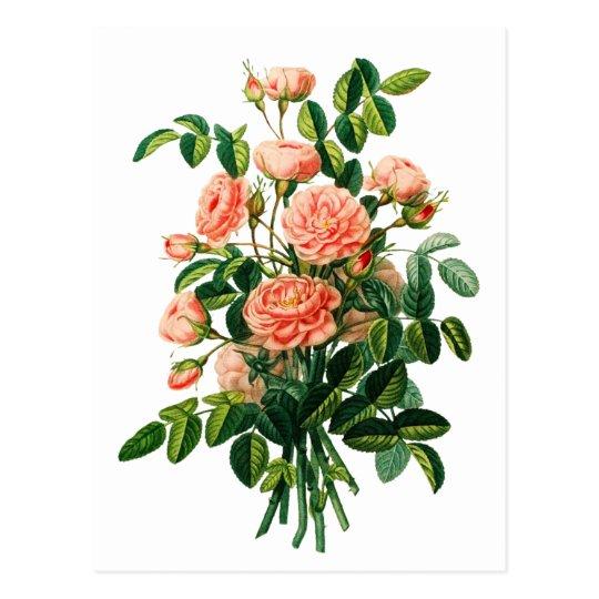 Botanical Pink Peony Bokeh Postcard