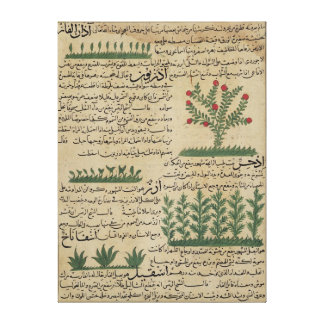 Botanical plants, illustration from 'The Canvas Print