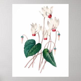 Botanical PREMIUM QUALITY print of cyclamen