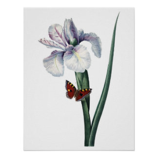 Botanical PREMIUM QUALITY print of iris